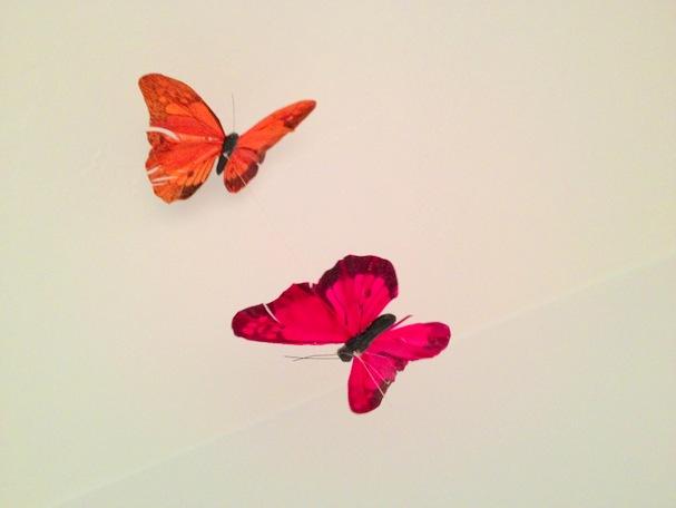 Garden Eats Butterfly magic