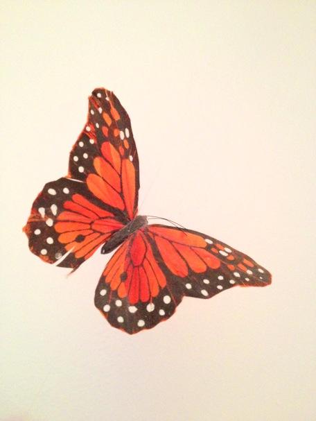 Garden Eats Monarch Butterfly Orange