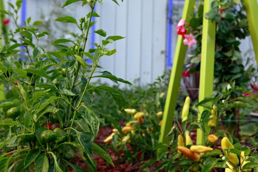 Garden Eats Jenkins Jellies Terra Trellis