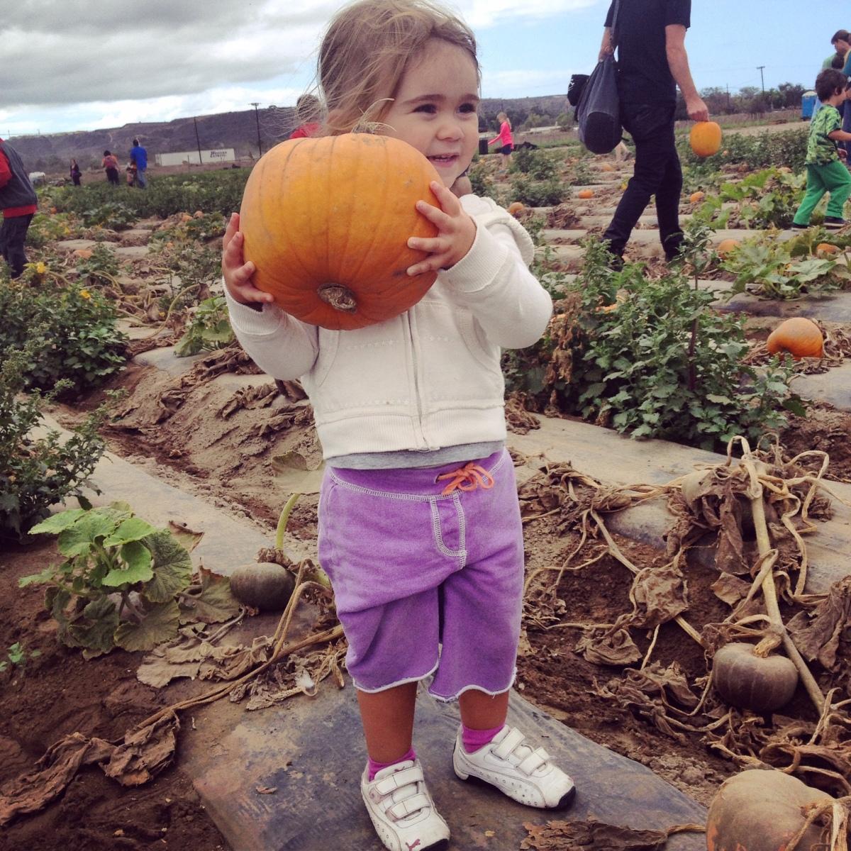 Garden Eats Halloween Pumpkin