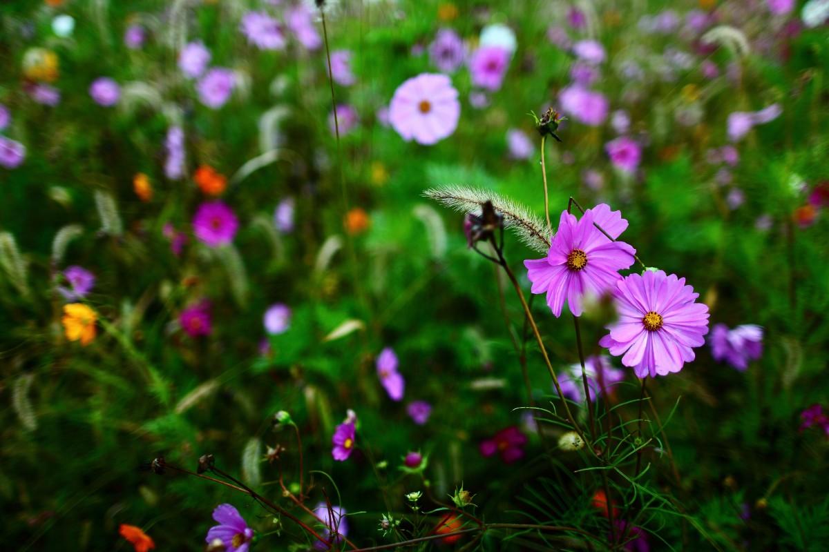 autumn-wildflowers