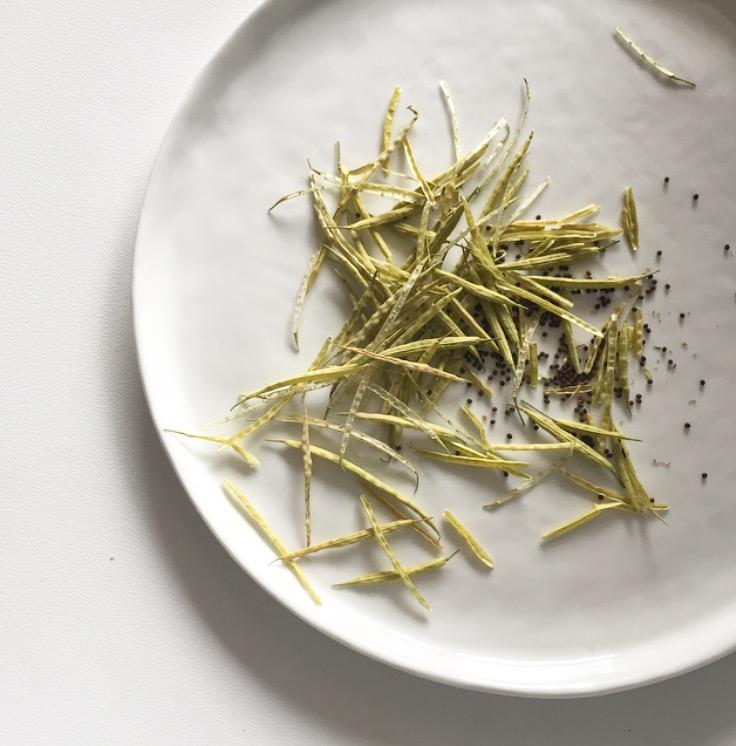 Garden Eats Heirloom Broccoli Seeds