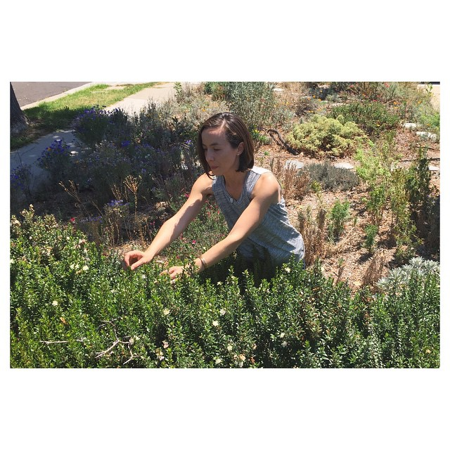 Garden Eats Eco Kat LA Myrtle