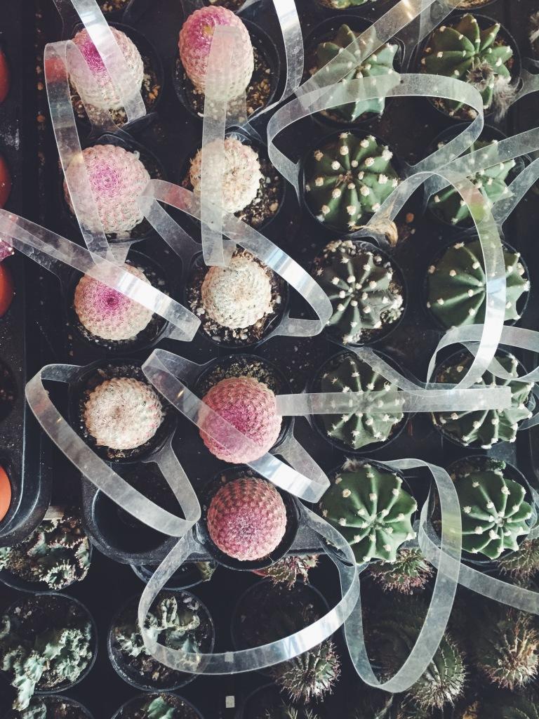 Garden Eats Pigment Pink Cacti