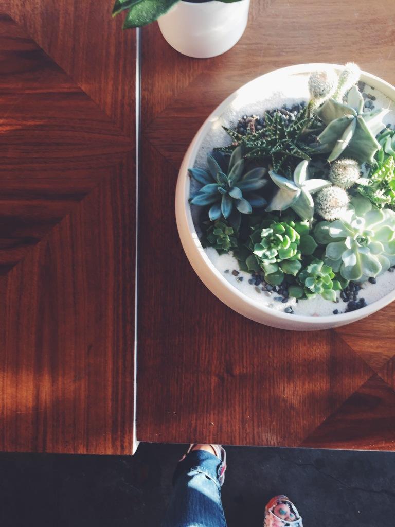 Garden Eats Pigment Plant Coexistence