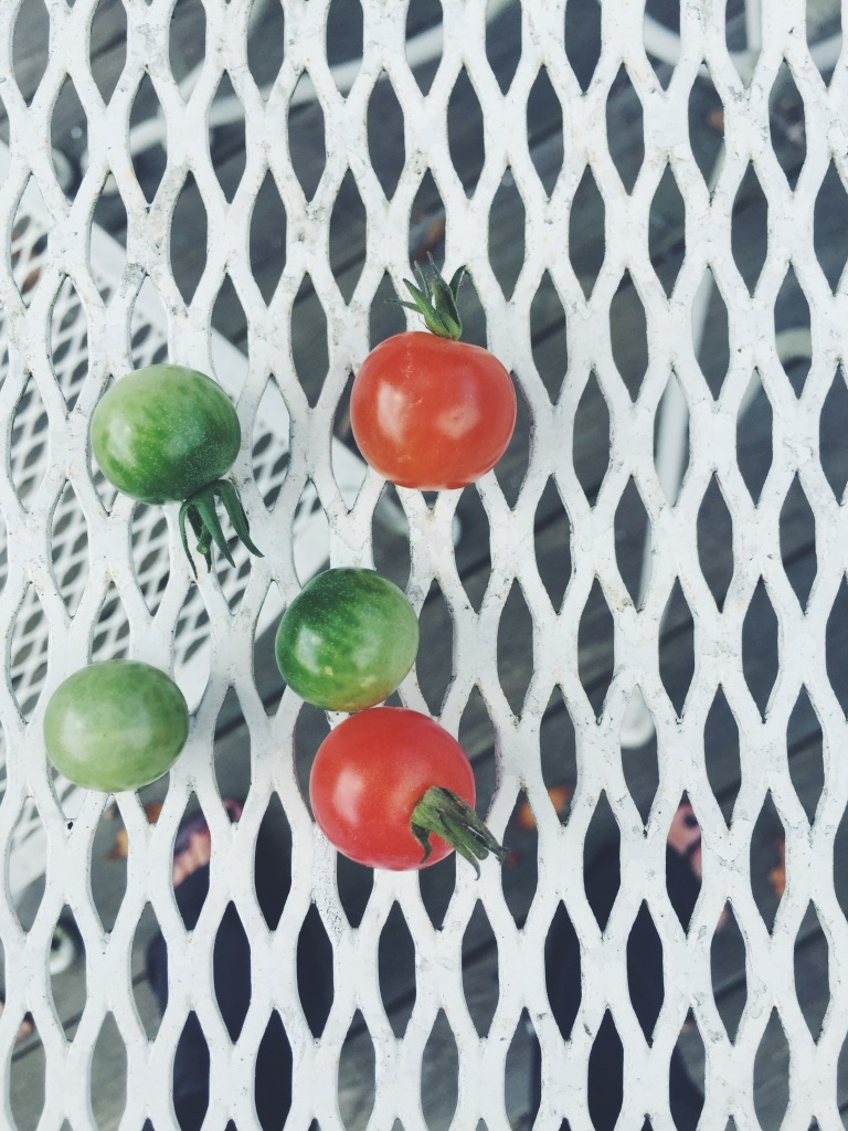 Garden Eats Tomatoes